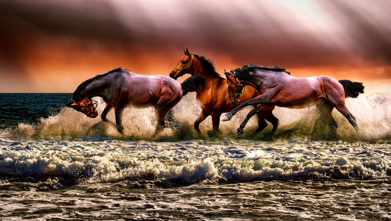 Horses galopping through the water
