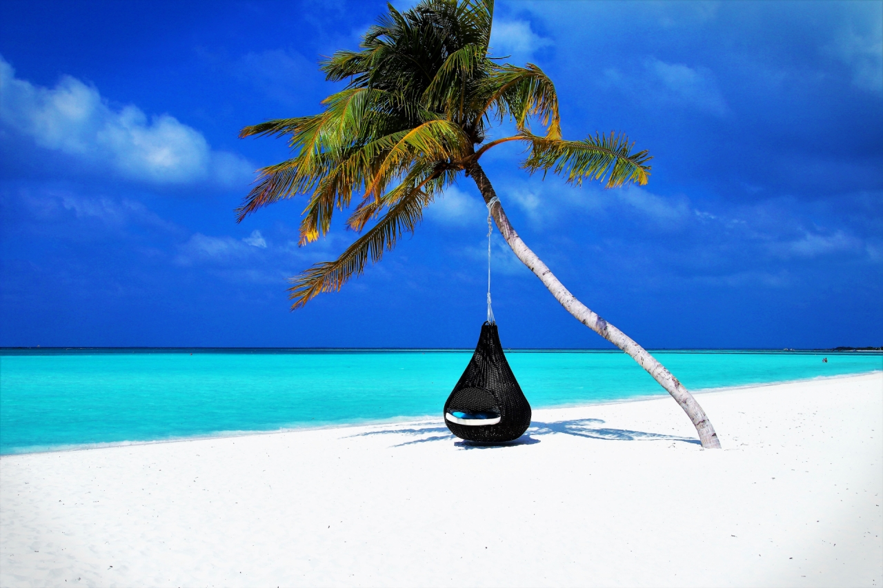 Palm tree and hammock in Maldives beach coast