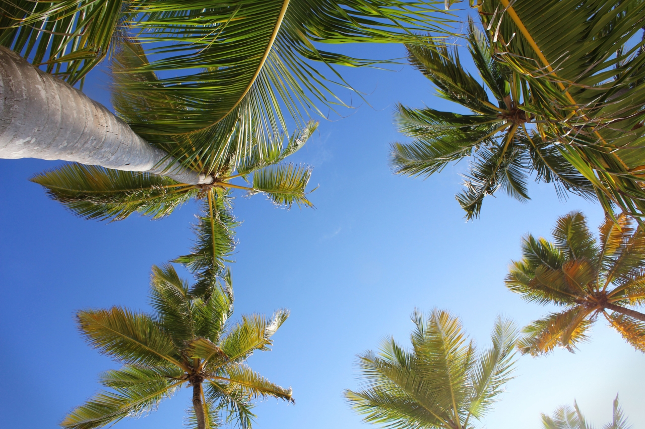 Palms and sky in Punta Cana, Dominican Republic