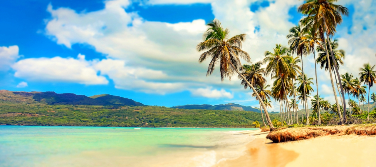 Paradise beach with palm trees