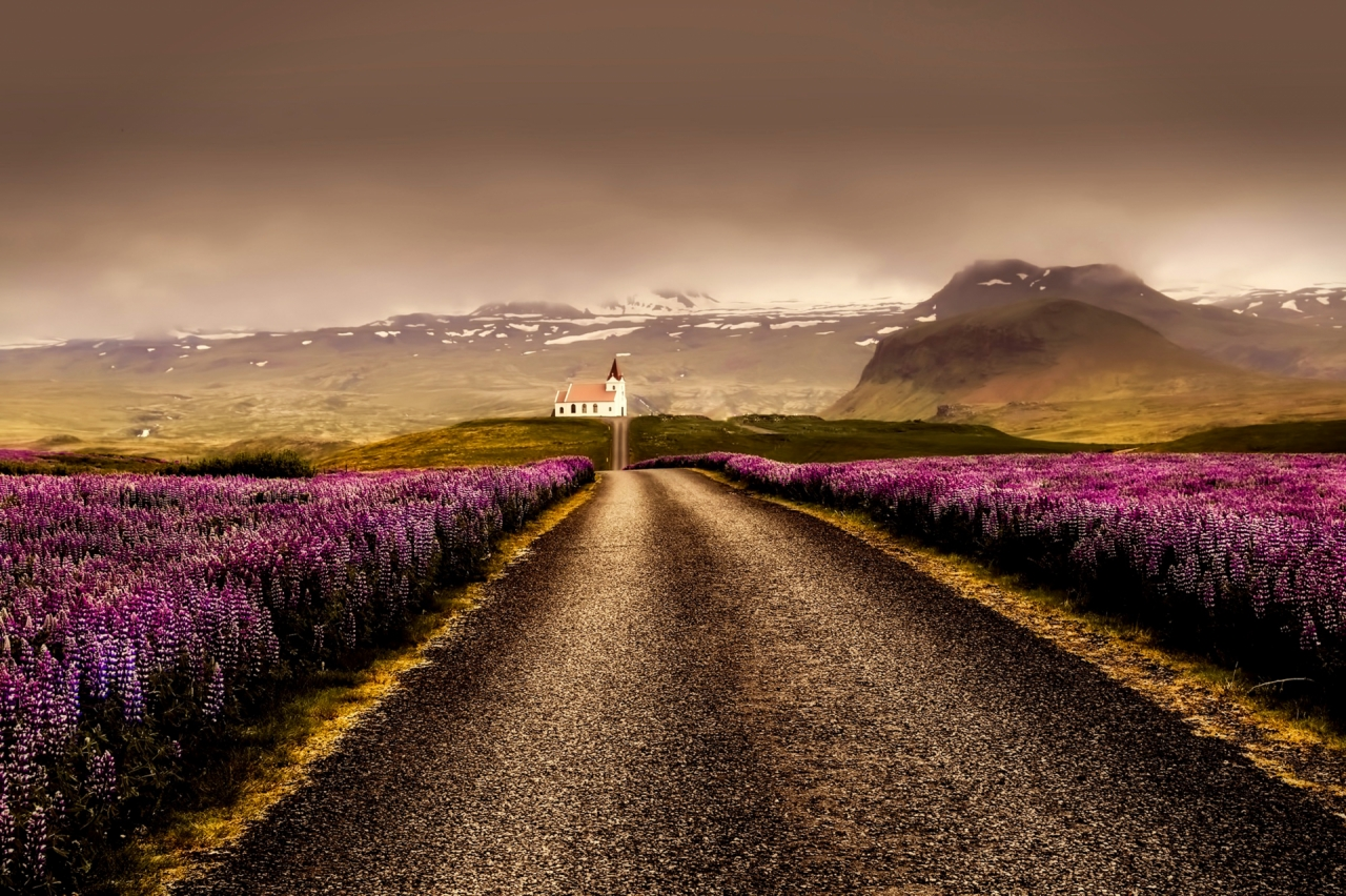 Purple flowers, road and church in Iceland
